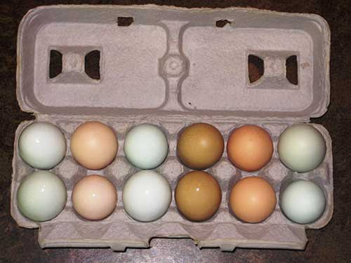 Pasture Raised Organic Poultry and Eggs